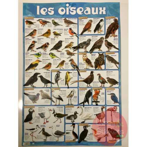 Posters éducatifs - Les oiseaux
